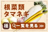 根菜類タマネギ