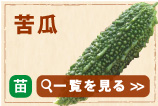 苦瓜(ゴーヤー)